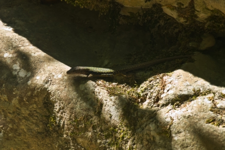 sailling: lizard Stock Photo