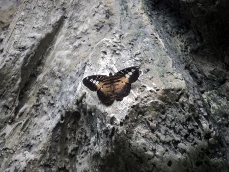 protozoa: butterfly