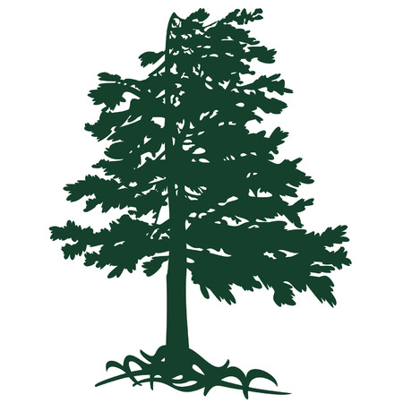 cedar from Gimalaev Vector