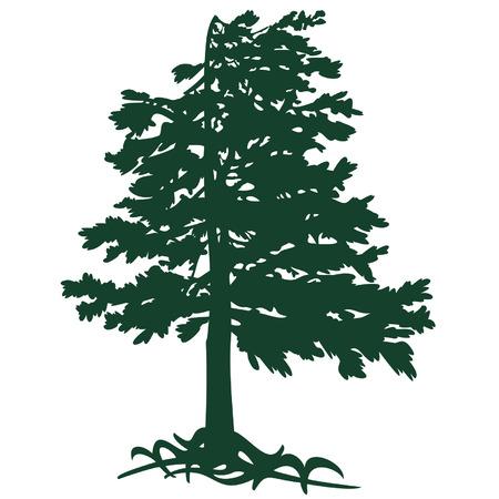 cedro del Gimalaev