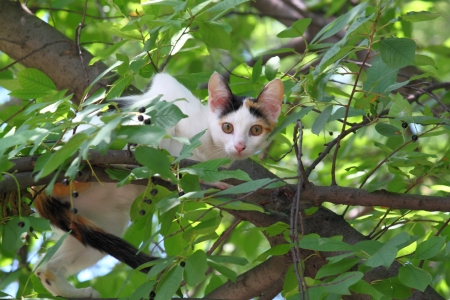 Kitten on the tree among the leaves