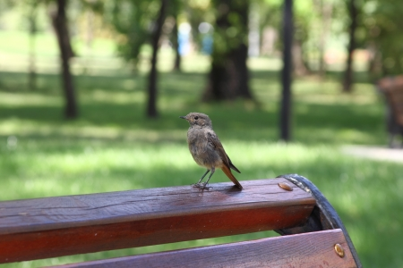 Little birdie on a bench in a city park photo