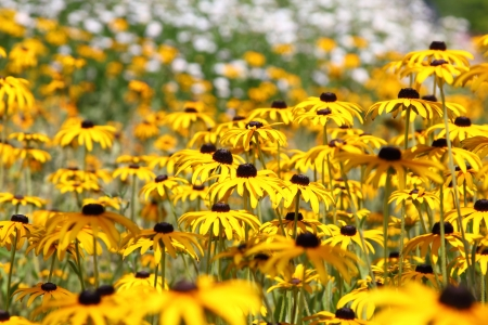 Meadow with yellow flowers in a city park Stock Photo