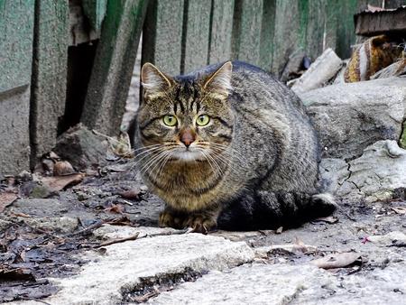 Beautiful cat in a garden Stock Photo