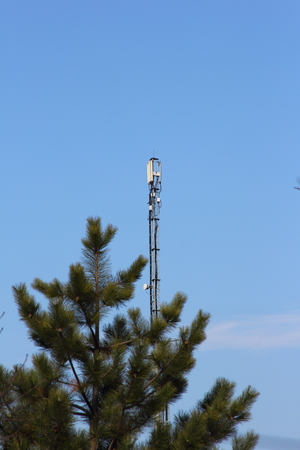 Antenna tower of cellular in a forest
