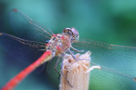 Dragonfly on a wooden peg in the garden