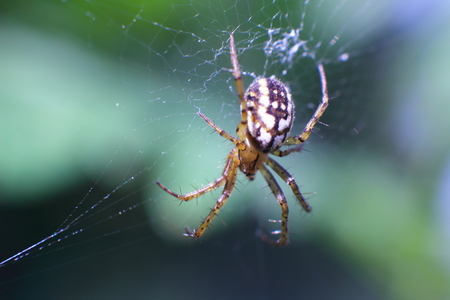 Spider on the web leads hunt