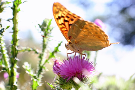 Yellow butterfly drinks nectar from a flower Stock Photo