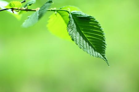Green leaf on a tree branch