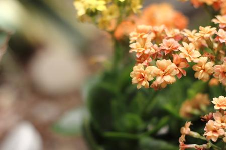 Flowering cactus at the Botanical garden