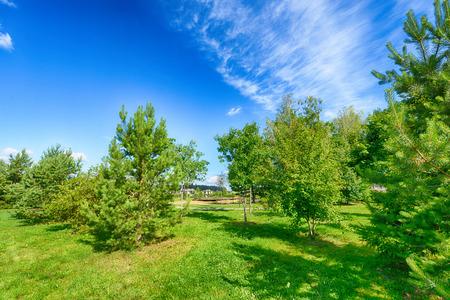 Landscape of natural plants.