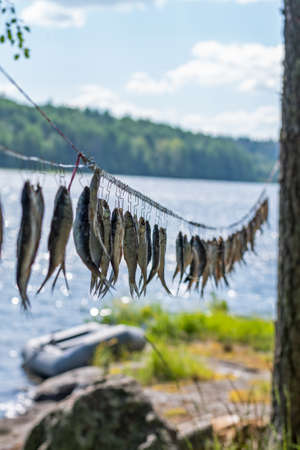 Dried river fish hanging in the sun on hooks against the background of wild nature. Beer snacks and lots of delicious fish