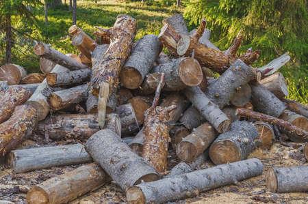 A bunch of pine chocks. Timber cutting. Firewood. Natural light