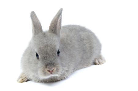 grey little rabbit over white Stock Photo - 12868895
