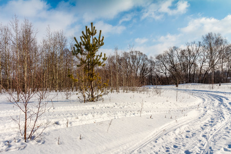 snowdrifts: Winter road through a sparse forest and field, sunny day Stock Photo