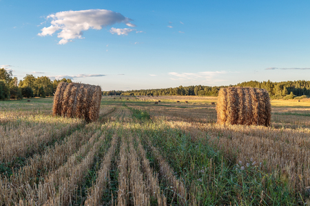 hayroll: The straw is pressed into bales in the field