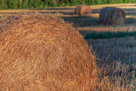 hayroll: Straw pressed into bales, rural views summer evening