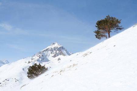 etude: Trees on a mountain slope