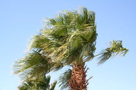 strong wind: Palm tree under a strong wind in the resort in Egypt