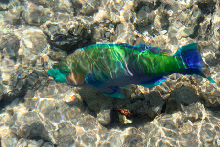 tour operator: Indistinct background on bright fishes in the Red Sea Stock Photo