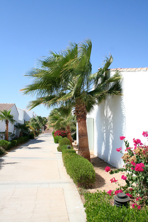 tour operator: Path and palm trees in the territory of hotel Sheraton in Egypt