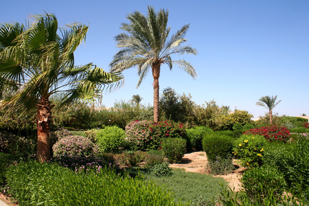 bush to grow up: Palm trees and vegetation in hotel in Egypt