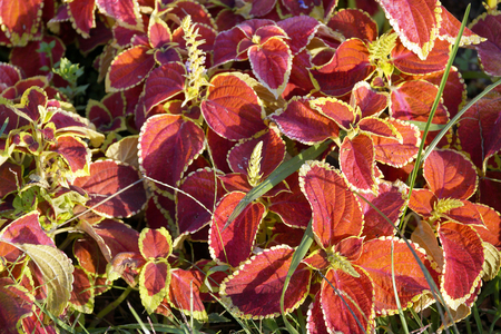 look after: Background in the form of ornamental plants of bright flowers on beds