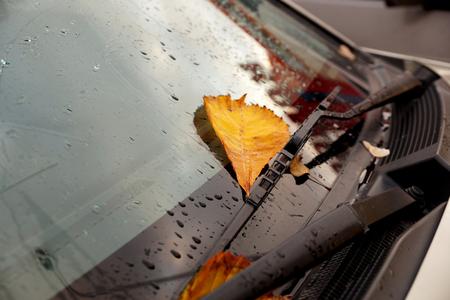 etude: Autumn leaves on a car windshield Stock Photo