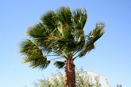 tour operator: Palm tree under a strong wind in the resort in Egypt