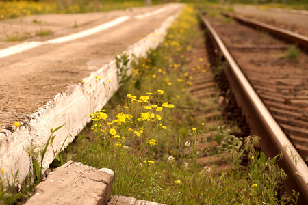 Yellow spring flowers on the railroad in the territory of the city Stock Photo