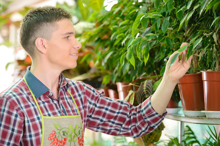 Portrait of a young man florist that cares for the flowers in the greenhouse photo