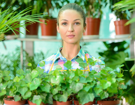 smiling woman in a greenhouse: Young smiling woman florist working in the greenhouse.