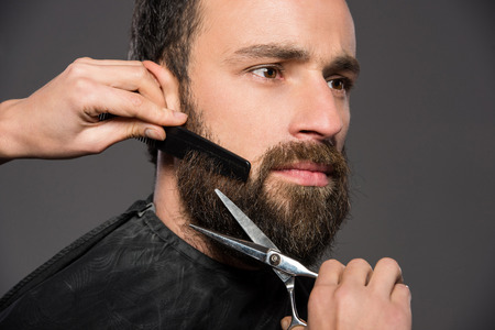 barber: Image as somebody is trimming the beard of a young man on the grey background. Stock Photo