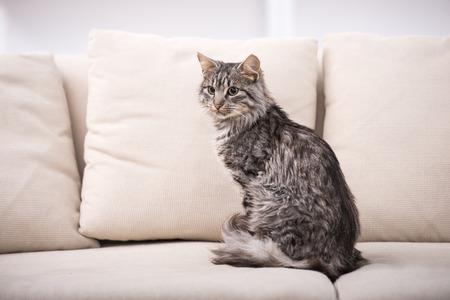 Portrait d'un joli chat est assis sur un canapé.