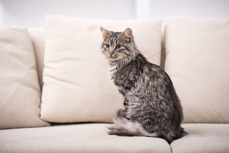 Portrait of a pretty cat is sitting on a sofa. Stock Photo