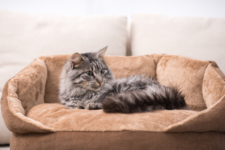 grey cat: Cute cat is lying in his cat bed. Stock Photo