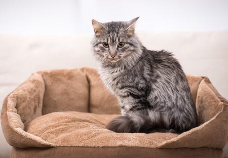 かわいい猫は彼の猫のベッドで座っています。