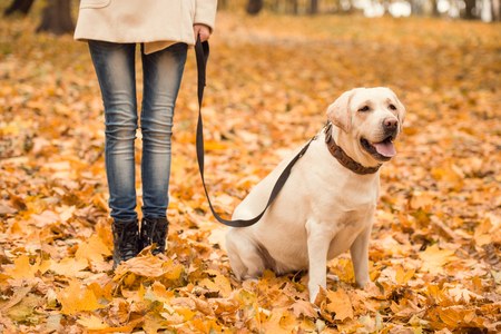 Portrait of a beautiful young woman with her dog while walking in the autumn park Stock Photo