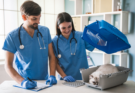 Beautiful young veterinarians are examining a cute cat and smiling while working in clinic Imagens
