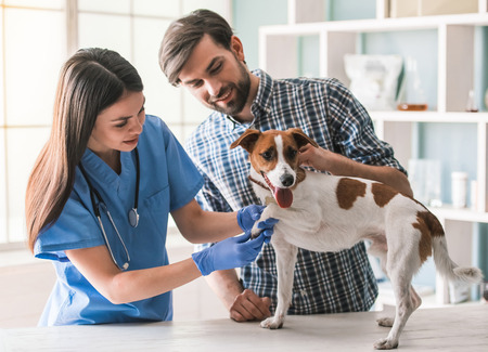 Cute dog is being examined by the beautiful female veterinarian, his handsome guardian is near