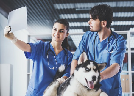 Two veterinarians carefully consider Xray image of Siberian husky.Reception at vet clinic.