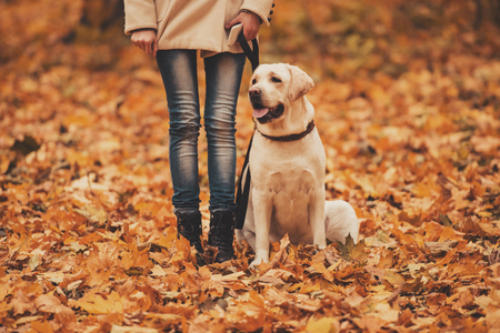 Woman and Labrador in Autumn Park. Retriever in Park. Walking with Dog. Pets and People. Best Friends. Autumn Background. Dog and Leaves. Pet and Owner Portrait. Attractive Joy Labrador.