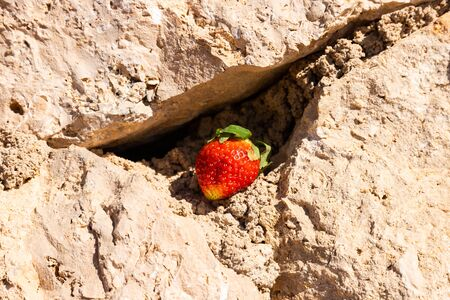 Sweet strawberries on stone on a sunny day Stock fotó