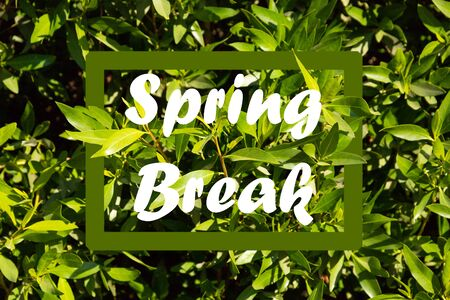 Text SPRING BREAK on nature background. Additional education concept 写真素材