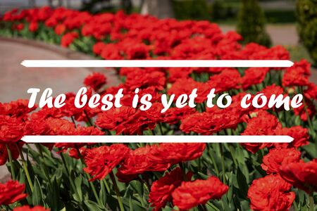 Inspirational Quote - The best is yet to come with flowers in background