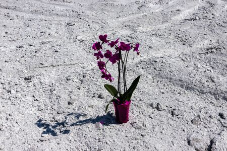 Orchid flower on a background of chemical waste as a symbol of nature protection. Business and Ecology Concept Фото со стока