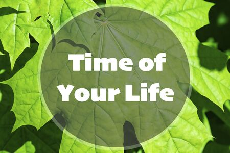 Time of your life inspirational quote on a natural background.