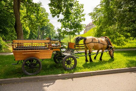 A horse harnessed to a wagon in a public park.