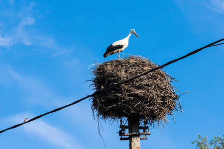 Stork in its nest in the summer months. Stork's nest. Stockfoto