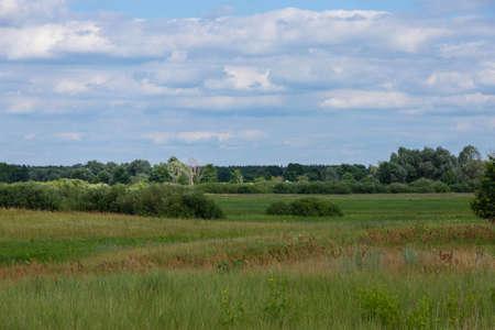 Landscape wild meadow, field with flowers under the blue sky.